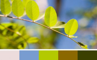 كيف تختار ألوان ملابسك من الطبيعة حولك ؟